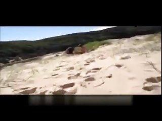 Amateur mature bear cruises the beach in australia