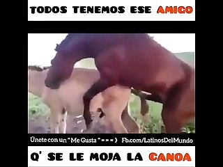 Zofilia caballos gays