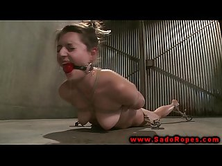 Hogtied gagged bdsm whore pussy whipped